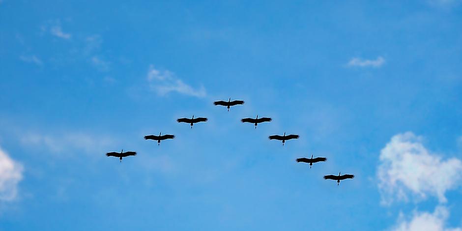 Persoonlijk leiderschap: goed leidinggeven start bij jezelf